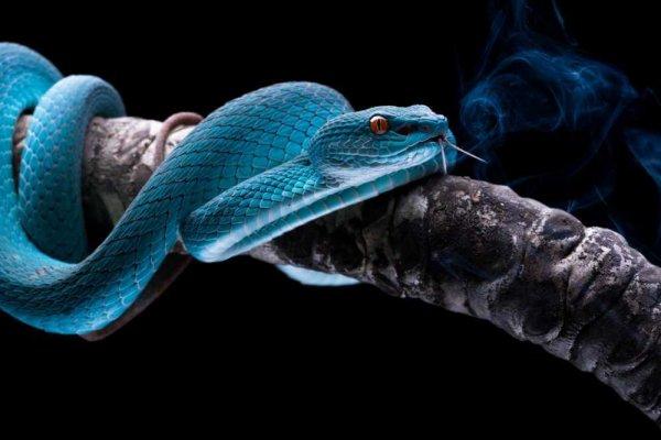 Nằm mơ thấy rắn có ý nghĩa gì đối với bản thân?