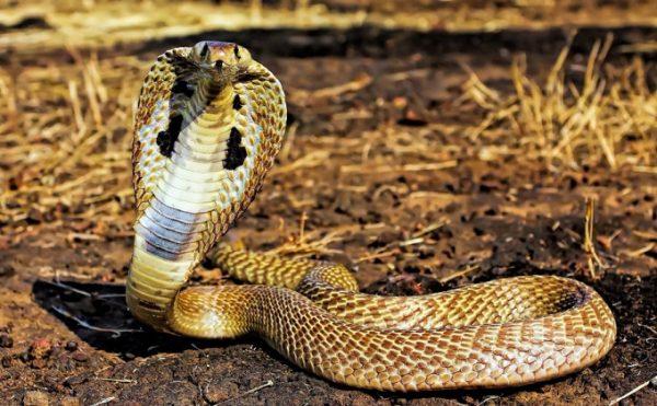 Ý nghĩa giấc mơ thấy rắn điềm báo tốt lành