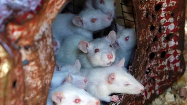 nằm mơ thấy chuột cắn