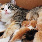 Nằm mơ thấy mèo đẻ con nói lên điềm lành hay điềm dữ?