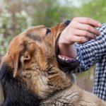 Giúp bạn giải mã giấc mơ thấy chó cắn nói lên điều gì?