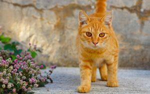Mơ thấy con mèo vàng