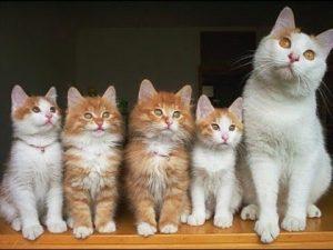 Nằm mơ thấy mèo đẻ có ý nghĩa gì?