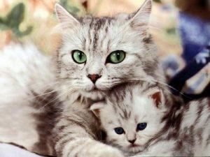 Nằm mơ thấy mèo đẻ đánh con gì?