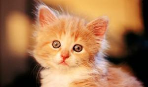 mơ thấy mèo vàng